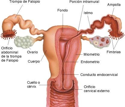el flujo de una mujer: