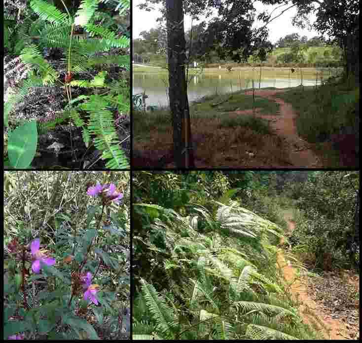 Seri alam beautiful jogger park