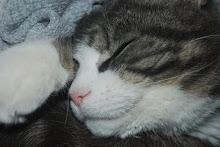 Goaste katten Frej