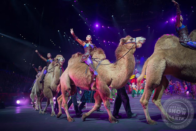 Desert Goddesses + Robert Stipka wow @RinglingBros crowd with dazzling camel performance!