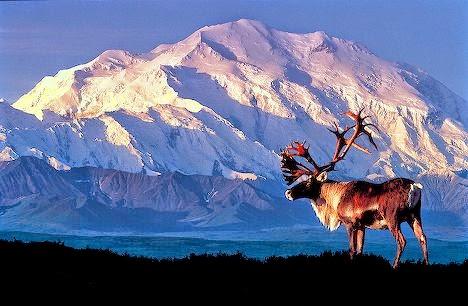 Gunung Denali Alaska