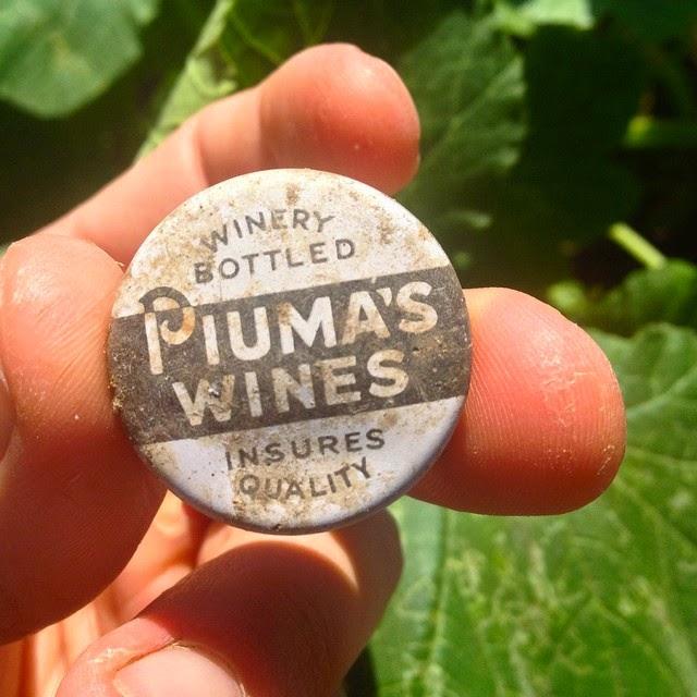 piuma wines