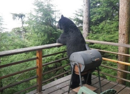 funny picture bear enjoys the view