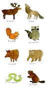 Animales salvajes (3). Enviar por correo electrónicoEscribe un blogCompartir .