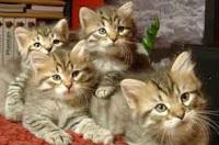 grupo de cuatro gatitos