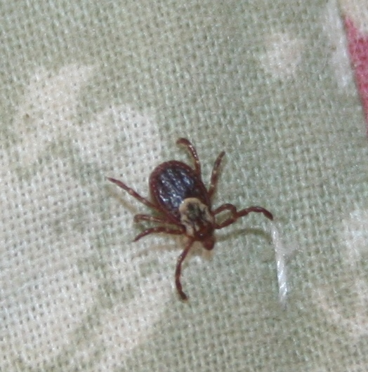 how to kill deer ticks on clothing