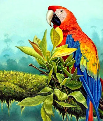 paisajes-del-amazonas