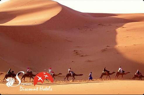 Egypt Camel Travel
