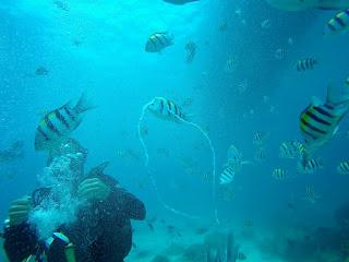Diving Racha Yai - Phuket