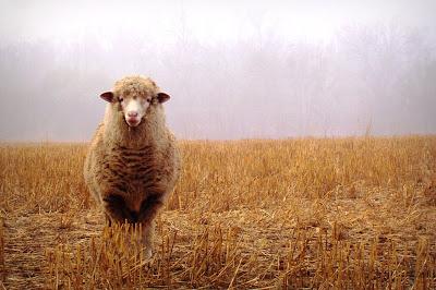 Landscape Animals Photography