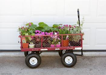 """garden center parade """"float"""""""