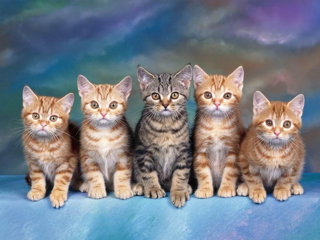 Wallpapers Fair Supper Sweet Cat Wonderful Wallpapers For Desktop Image