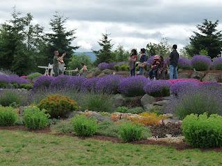 Visitors love Sequim Lavender Rock Garden