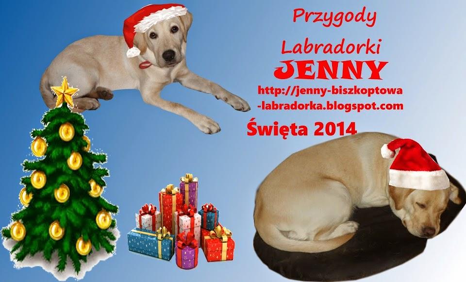 Przygody Labradorki Jenny
