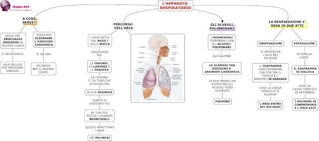 mappedsa mappa schema dsa dislessia disgrafia disortografia riassunto scienze elementari medie apparato respiratorio respirazione ossigeno polmoni