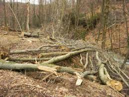 Berbagai Kerusakan Flora dan Fauna oleh Manusia | Materi ...