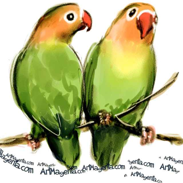 Lilian's Lovebird sketch painting. Bird art drawing by illustrator Artmagenta