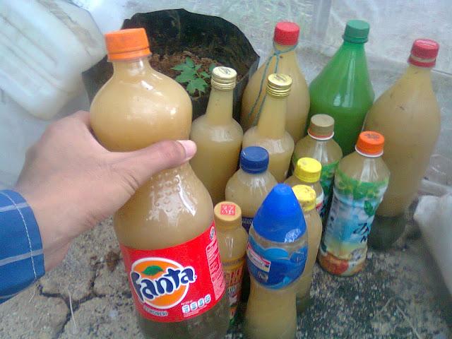 Botol-Botol Minuman Berisi Larutan POC Berbahan Dasar Tanaman Kipahit
