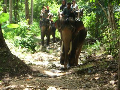 Elephant Trekking Trip in Koh Samui