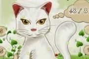 Kedi Matematik