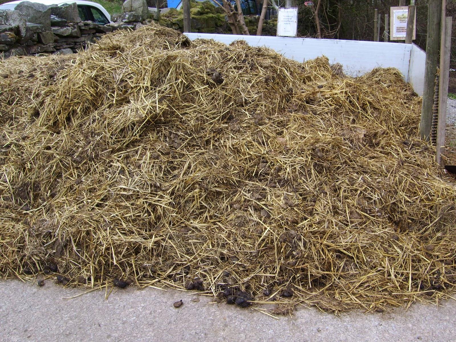 Fresh Horse Manure | www.imgkid.com - The Image Kid Has It!