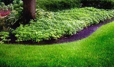 как-создать-газон