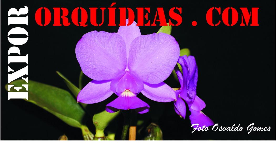EXPOR ORQUIDEAS.COM