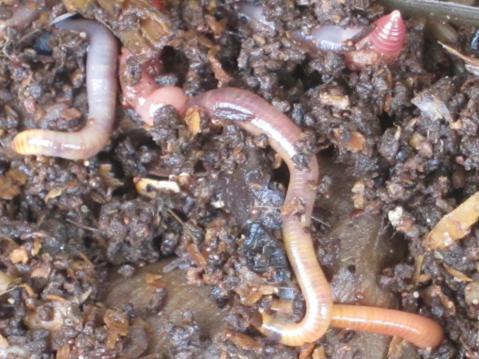 Worms In Cat Litter