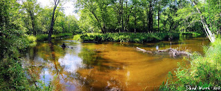 panorama river, sunlight, sandy river, manistee national forest trail