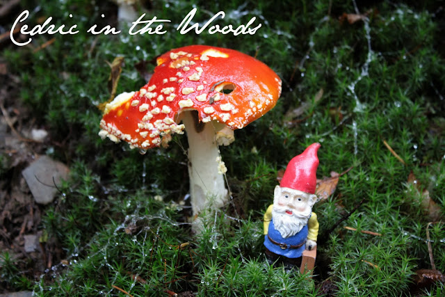 Traveling Gnome in the Eltzbach Woods - The Tipsy Terrier blog
