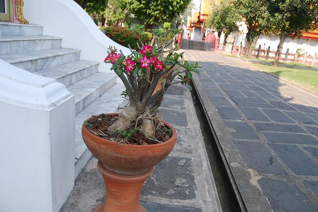 интересное растение)