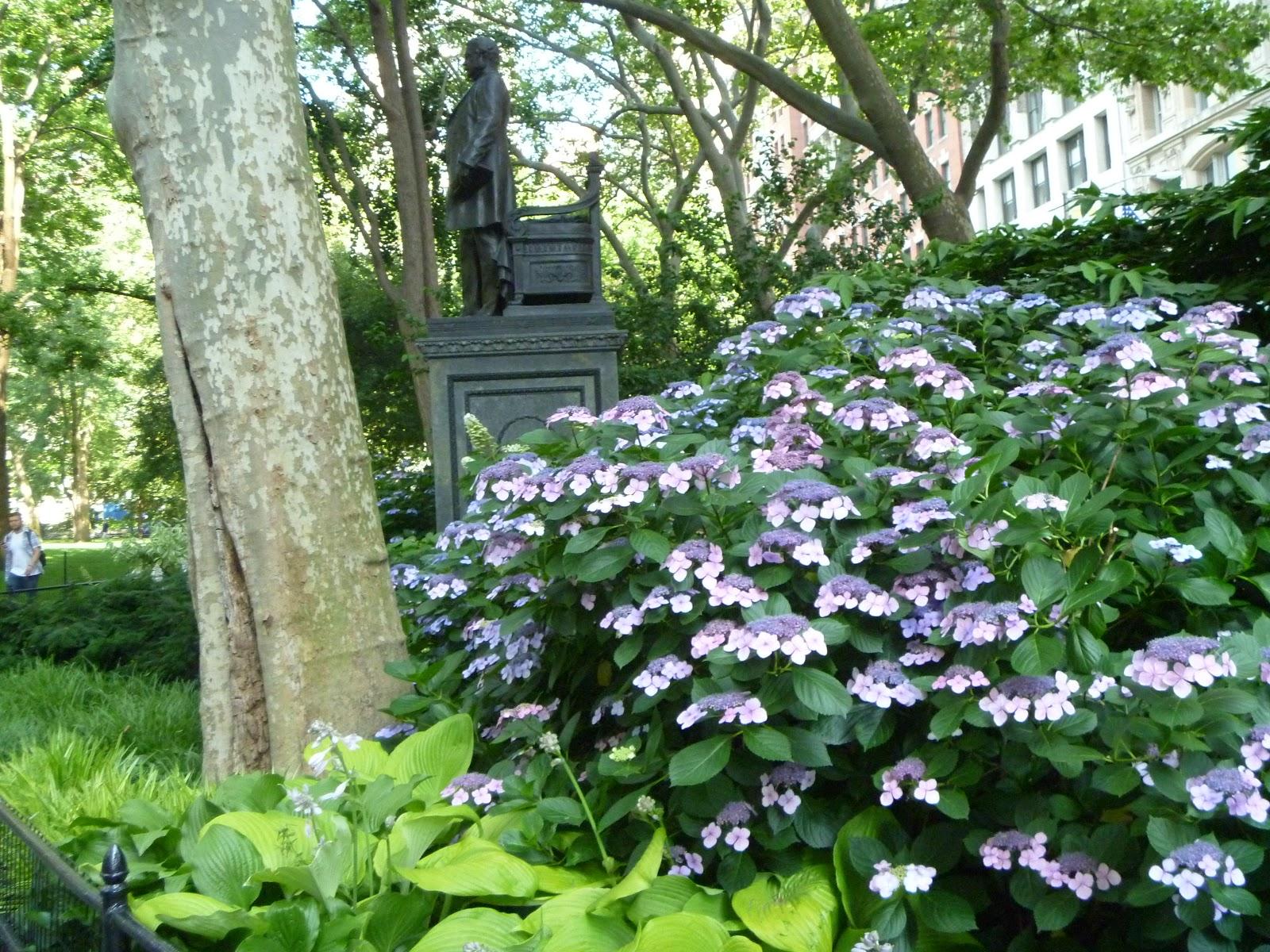 Brooklyn garden girl hydrangea happenings for Hydrangea quercifolia