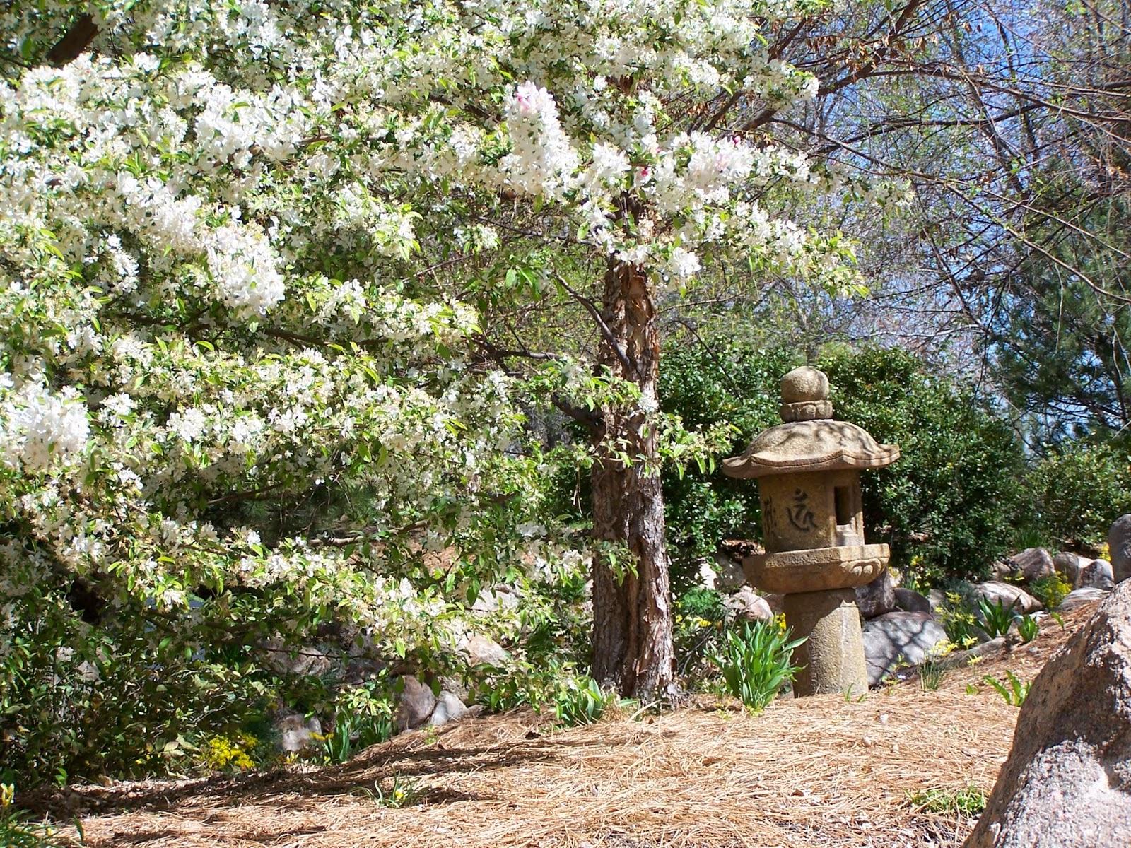 Synova: Albuquerque Botanical Garden
