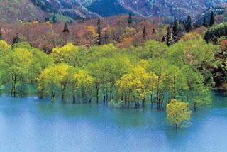 Shirakami-Sanchi Tohoku, Japan (Best Honeymoon Destinations In Asia) 4