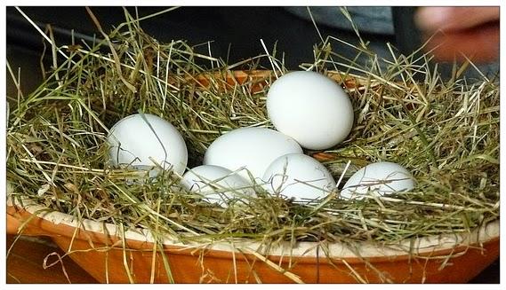 jajko w kosmetyce, maseczki
