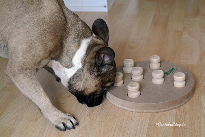 Hundeintelligenzsspielzeug