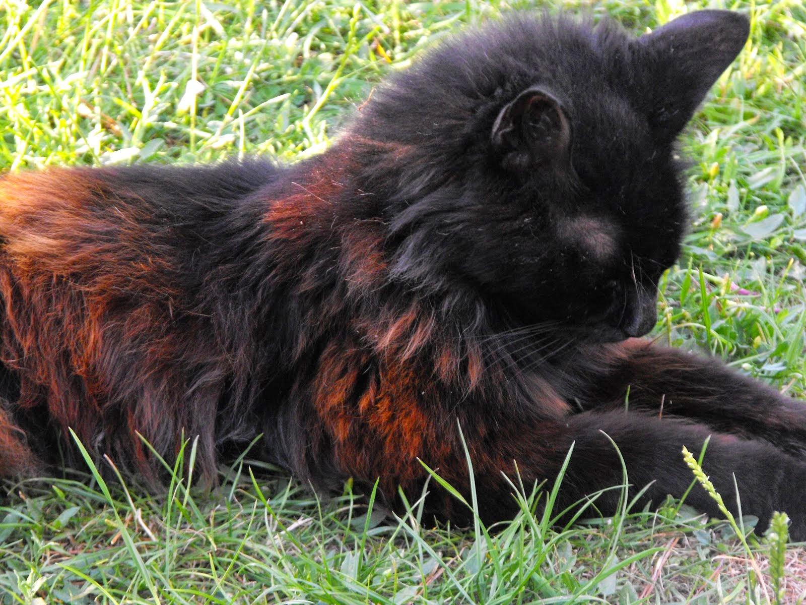 R.I.P.Sooty cat