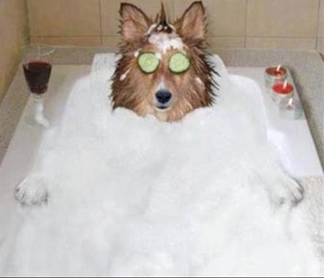 spa and dog