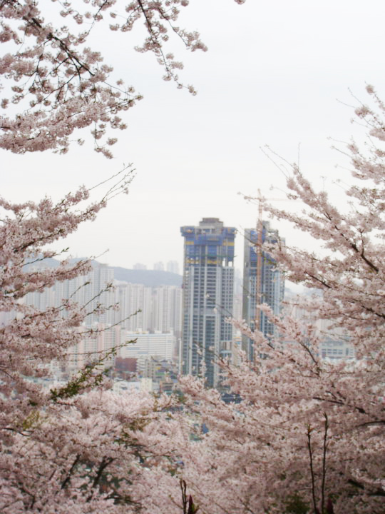 Busan blooms South Korea