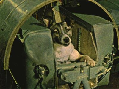 Laika. First dog in space. No provisions were made for her return, and she died there