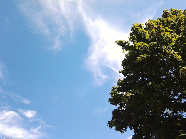 Vancouver, city, trees, vancity, greenery, lovely, green, fashion