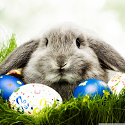 Happy Easter Bunny! easter