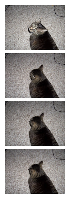 Four photos of my cat ignoring me