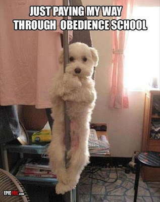 "Dog on stripper pole says ""just paying my way through obedience school."