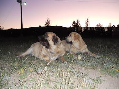 Leon and Gitana