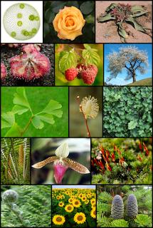 Bitkiler ve türleri