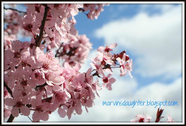 Springtime Blue Skies