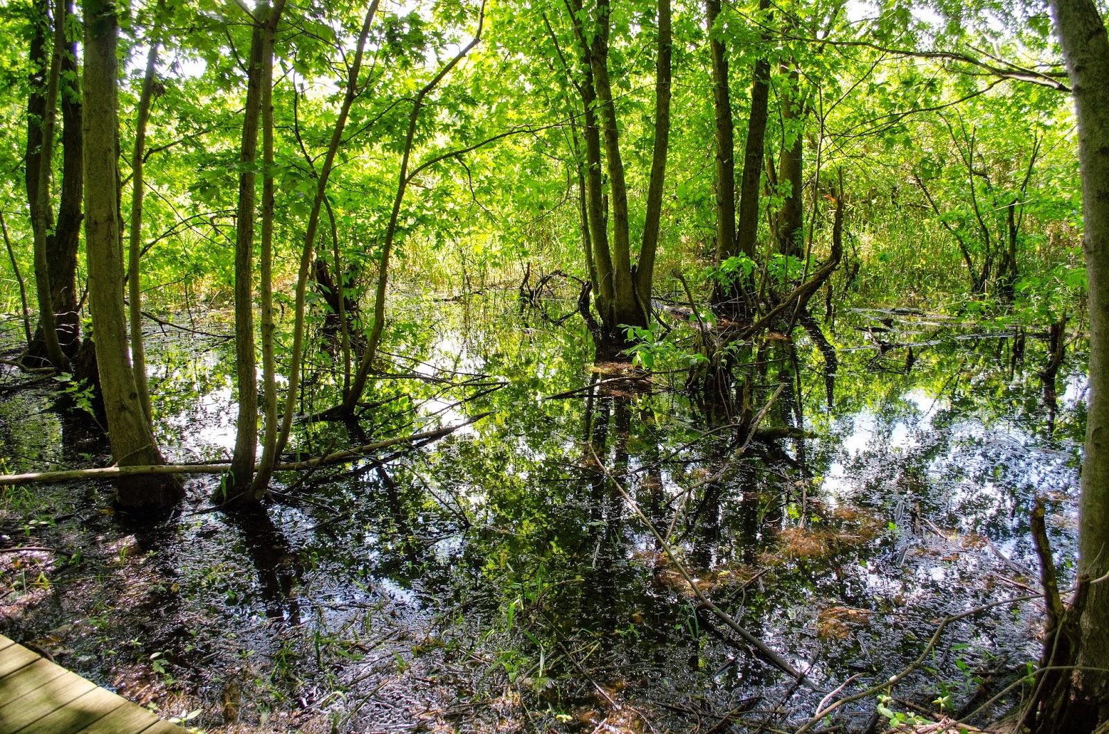 Calamus Swamp
