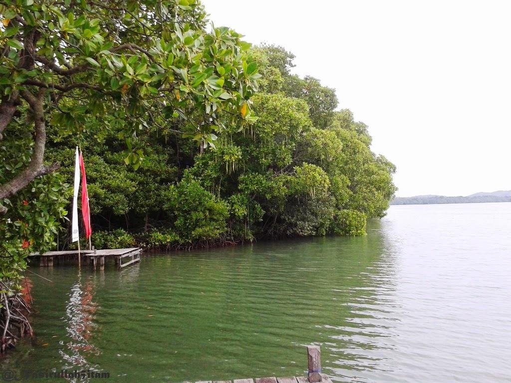 Ini tamanan bakau (hutan mangrove) disekitaran Karimunjawa