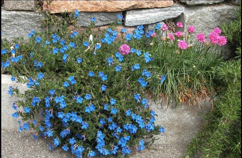 Un giardino di perenni in ticino blu paradisiaco for Piante perenni per bordure